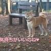 柴犬チャー、八ヶ岳~蓼科 2泊3日の旅 2日目