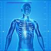 ●セミタイアの誤算、骨密度と筋肉量と体脂肪率が悪化