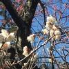 【四季を訪ねて】 春近し ~梅とジロー
