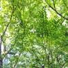 隅田川テラスから永代橋を眺め、十思公園で緑を眺め、ローストチキンを自作。(中央区新川)