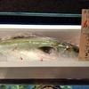 私が選ぶBest5:好きな魚のダジャレ編(英訳付き)