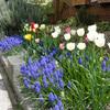 色とりどりの球根花壇
