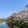 2021年桜の花見散歩(地蔵川)勝川駅・南方面