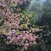 六甲山2019春、平成最後の山登り