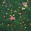 ロンドンの紅葉散歩。バッキンガム宮殿のお隣、St James's Park の秋景色。