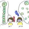 カウンセリング6  − ASD者の記憶・認知特性とB項目