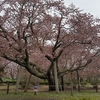 北海道道南地方の春のイベント情報