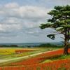 【北海道のようなお花畑】やくらいガーデン :宮城の撮影スポット