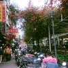 台湾 ❀ 龍山寺・華西街観光夜市・西門町