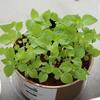 私のかわいい植物が禿山になった話