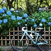 川崎のあじさい寺(妙楽寺)サイクリング