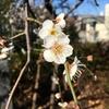 春典序曲:寒暖差の激しい日の装い