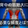 背中(広背筋・大円筋)を筋肥大させるのに効果的な筋トレ頻度は?