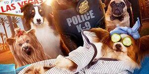 【ショー・ドッグ(原題)】映画の感想:サンドラブロックのデンジャラスビューティ犬版、今年のワースト作品