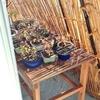 夏の盆栽はすだれの陰にあり