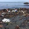 ゴミ拾いが強迫性障害を寛解させているかもしれない。