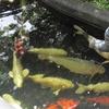 写真保存を兼ねたブログ 山野草展は楽し、神代植物公園 (4)