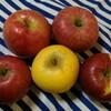 おはようリンゴ