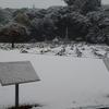 英連邦戦死者墓地 雪景色