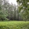 原生林とアヤメ
