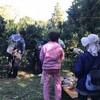 美浜町でEMミカン狩りと自然生活モデルのようなところで昼食会