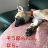 犬の嗅覚と犬が好きな人