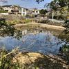 明石池(京都府長岡京)