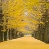 秋のマーダー