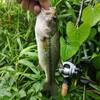 バス釣り2019(26)【風の新利根川】