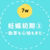 【7w/妊娠初期②】7週目...まだ胎芽と心拍が確認できない