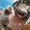 雨田甘夏、自室です。【猫とテリトリーとリビング事情】