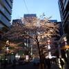 年度末の夜桜見物〜31日木曜日