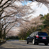 TOYO TIRES箱根ターンパイク  桜のトンネル 2014