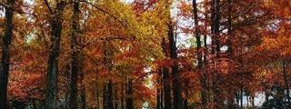 今年はポカポカ紅葉なのです。
