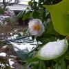 3月の終わりに雪が降った。「庭いじりの贅沢」