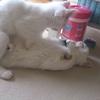 赤ちゃんと猫との共同生活はできる?