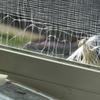 網戸で巣作り