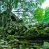 【カンボジア旅行記 ep.9】ラピュタの世界!? 修復がされていない森の寺院ベン・メリア。3日目【2018.6.11】