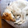 あいつの朝礼を3回聞くと死ぬ、と言われた男と生き延びた保護犬。