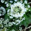 春の花の冠