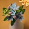 娘が初めてプレゼントしてくれた花:ブルースター