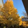 中島公園 紅葉 IN SAPPORO 2018