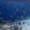 朝のシュノーケリング レジデンス1~4前の魚群をチェック!