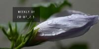 WEEKLY Df 20-07_2.3.