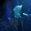 数年ぶりに男鹿水族館GAOに行ってきました