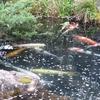 4月の高尾駒木野庭園に行ってきました