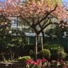八重桜から次の花へ