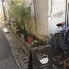 高田馬場にある日本茶カフェでかき氷を頼んでみる