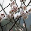 立春に思う、春は名のみの風の寒さや…、