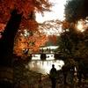 過去の写真セレクション(冬の紅葉と花)